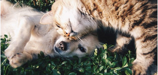 Pets are more than just companions; they are part of the family. They bring incomparable happiness and give unconditional love to their people. They etch a permanent place in their humans' hearts. Knowing how precious pets are, owners go to great lengths to make sure their fur family is happy, […]